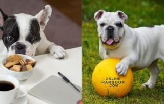 Pet Suppliers_OnlineHarbour website